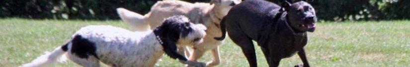 Bruin, the hounddog.